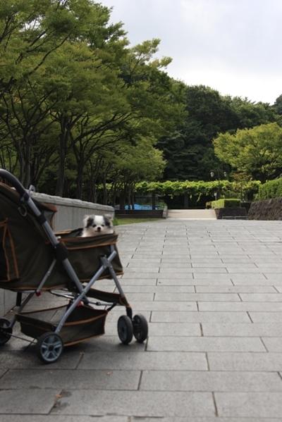 220@公園散歩.jpg