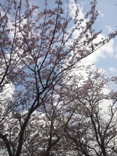DSC_0437@お散歩.jpg