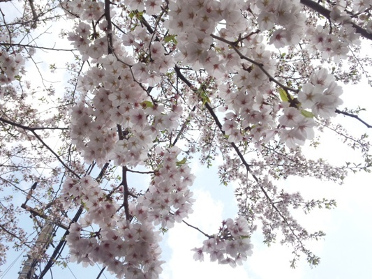 DSC_0439@お散歩.jpg